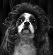 chien01